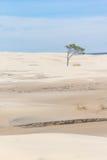 El árbol en las dunas en Lagoa hace el parque nacional de Peixe foto de archivo