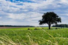 El árbol en paisaje verde en Niederstetten, a lo largo de la ruta llamó Romantische Strasse, Alemania imagen de archivo