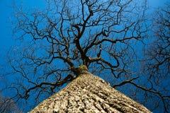 El árbol está cerca del cielo Foto de archivo libre de regalías