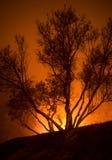 El árbol está en fuego Imagen de archivo libre de regalías