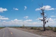 El árbol famoso del zapato del tamarisk cerca de Amboy en Route 66 Fotos de archivo