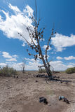 El árbol famoso del zapato del tamarisk cerca de Amboy en Route 66 Fotos de archivo libres de regalías