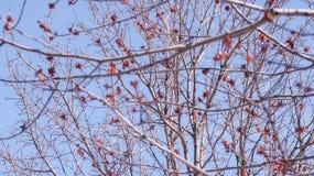 El árbol florece en primavera debajo de un cielo azul fotos de archivo libres de regalías