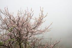 El árbol floreciente Imágenes de archivo libres de regalías