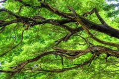 El árbol forestal Fotografía de archivo libre de regalías