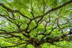 El árbol forestal Foto de archivo