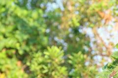 El árbol Forrest de la naturaleza del fondo empañó la suavidad abstracta para el bosque del gráfico de la publicidad de la tarjet Fotos de archivo libres de regalías