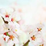 La primavera suave florece el fondo Imagen de archivo libre de regalías