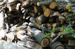 El árbol fue cortado junto imagenes de archivo