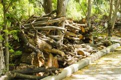 El árbol fue cortado junto abajo del borde de la carretera foto de archivo