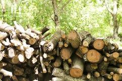 El árbol fue cortado junto Fondo del árbol borroso foto de archivo