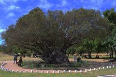 El árbol grande Foto de archivo