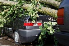 El árbol grande cae abajo en el coche durante huracán Imagenes de archivo