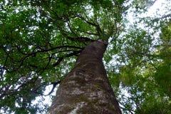 El árbol grande en arbustos oscuros de una naturaleza del bosque levanta para arriba imagen de archivo libre de regalías