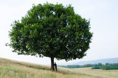 El árbol grande en la colina y el adolescente se sientan cerca escuchan la música en naturaleza Fotografía de archivo