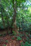 Árbol en selva tropical Fotografía de archivo