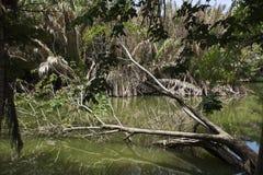 El árbol grande roto cae abajo en el lago de Sri Nakhon Khuean Khan Park Fotografía de archivo