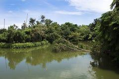 El árbol grande roto cae abajo en el lago de Sri Nakhon Khuean Khan Park Fotos de archivo libres de regalías