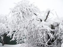 El árbol ha doblado debido a una capa enorme de nieve en sus ramas foto de archivo