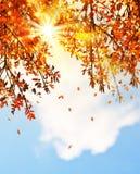 El árbol hermoso del otoño sale de la frontera del fondo Imagenes de archivo