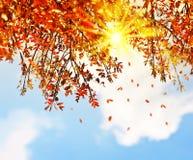 El árbol hermoso del otoño sale de la frontera del fondo Foto de archivo