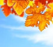 El árbol hermoso del otoño sale de la frontera del fondo Imagen de archivo
