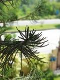 El árbol hermoso sale de paisaje verde foto de archivo libre de regalías