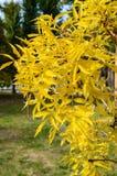 El árbol joven con amarillo se va en el primero plano, en el fondo del parque Fotos de archivo libres de regalías