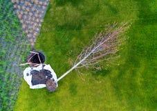 El árbol joven del árbol miente al lado del hoyo en el cual será plante Fotografía de archivo libre de regalías