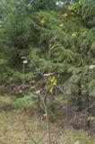 El árbol joven pierde follaje Foto de archivo libre de regalías