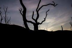 El árbol, la sequedad y la espera solos para la muerte Imagen de archivo