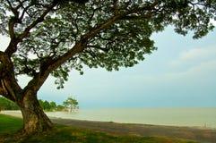 El árbol a lo largo de la cara de la playa con el azul claro Fotos de archivo libres de regalías
