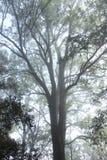 El árbol más grande imagen de archivo