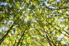 El árbol mira para arriba el cielo imágenes de archivo libres de regalías