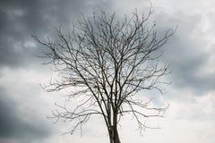 El árbol muerto Fotos de archivo