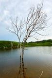 El árbol muerto en agua Fotos de archivo libres de regalías