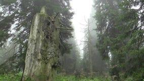 El árbol muerto es causado por las lluvias ácidas, los óxidos de azufre, el nitrógeno y el ozono, emisiones metrajes