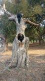 El árbol MUERTO más largo Imagen de archivo libre de regalías