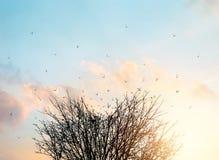 El árbol muerto transforma en pájaros de vuelo sobre la puesta del sol del cielo Imágenes de archivo libres de regalías