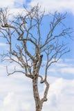 El árbol murió imagen de archivo