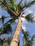 El árbol pacífico imagen de archivo