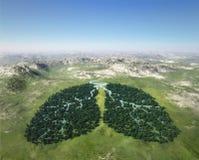 El árbol parece los pulmones Foto de archivo libre de regalías