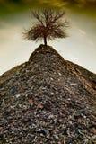 El árbol pasado Fotografía de archivo libre de regalías