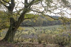 El árbol pasado en el borde del bosque imagen de archivo libre de regalías