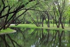 El árbol poderoso con las hojas verdes invirtió la reflexión en agua foto de archivo