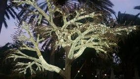 El árbol que brilla Imagenes de archivo