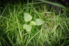 El árbol que crece en la hierba Fotografía de archivo libre de regalías