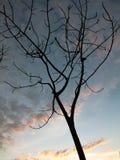 El árbol que es seco fotografía de archivo libre de regalías
