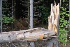 El árbol quebrado Foto de archivo