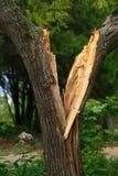 El árbol quebrado fotografía de archivo